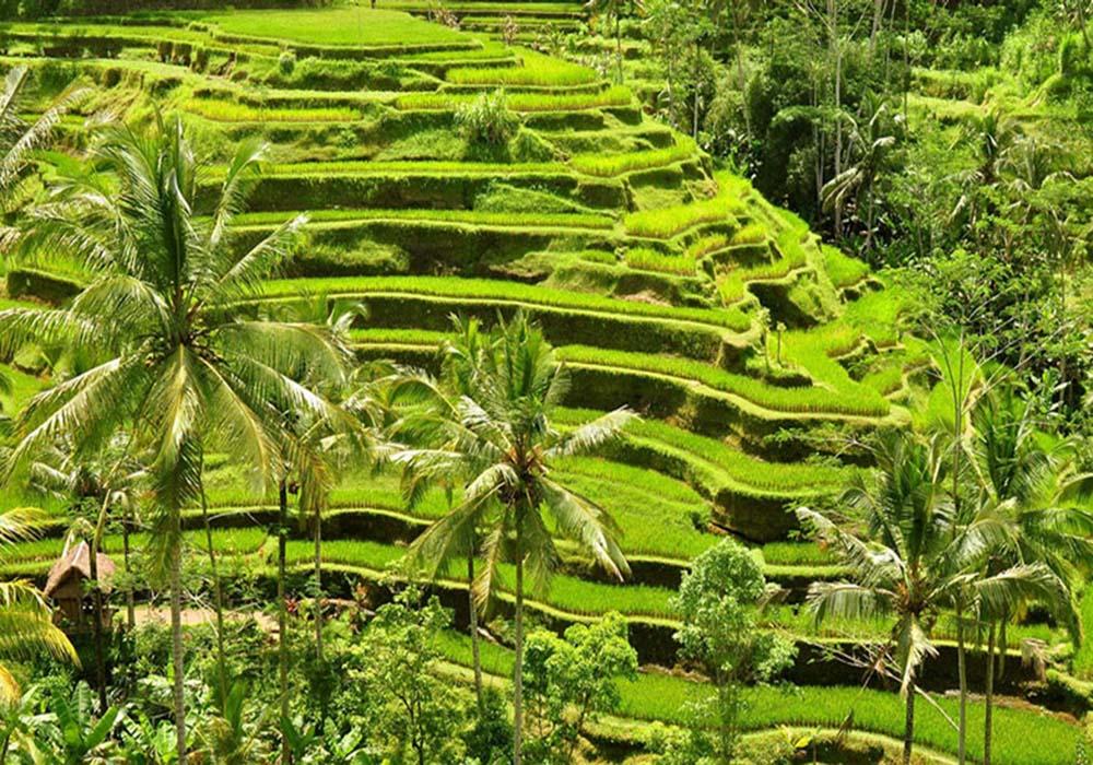 Tegal Alang, Ubud, Bali