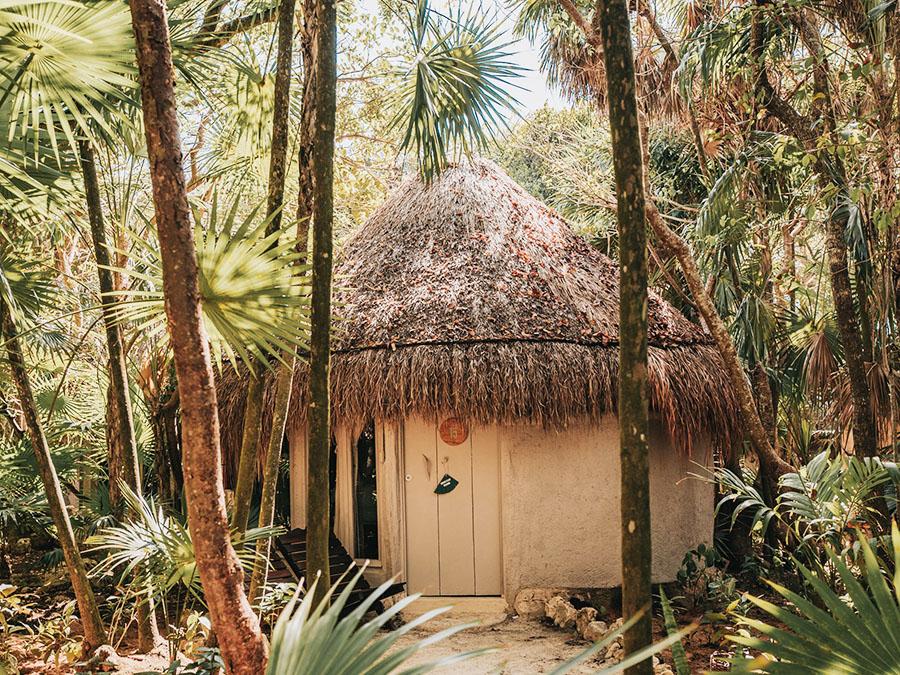 Jungle CABAÑA