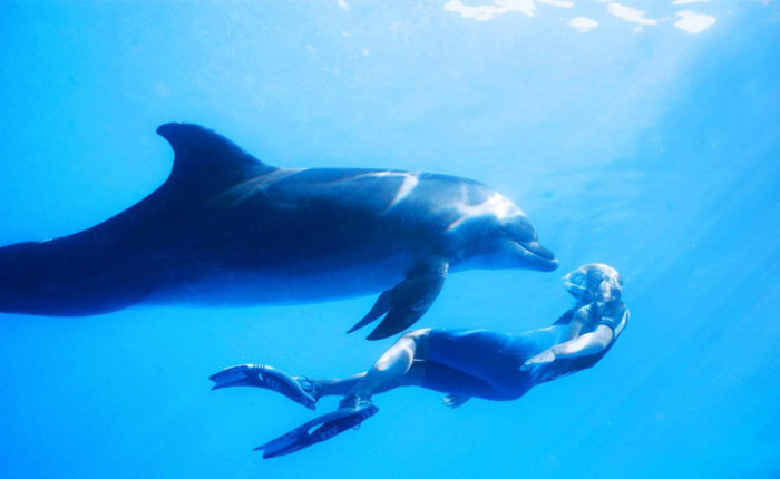 Xinalani Adventures: Swim with Dolphins