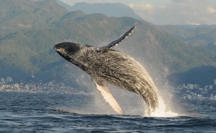 Xinalani Adventures: Whale Watching