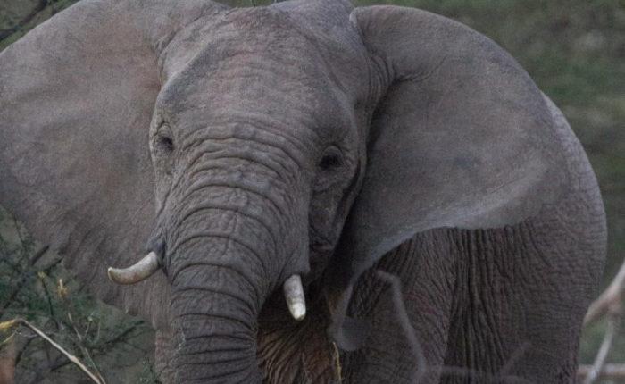 Marataba South Africa - Explore the Wildlife