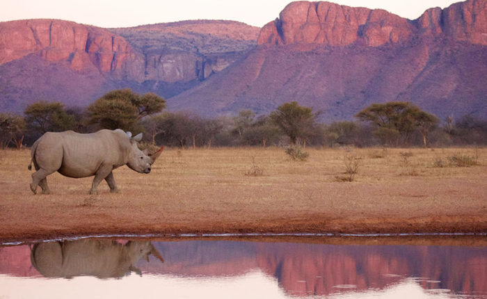 Marataba South Africa - Explore the Wildlife